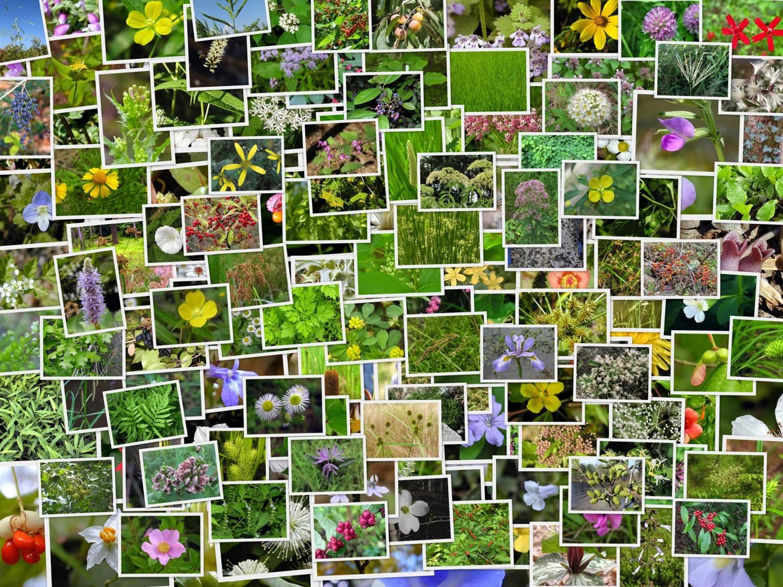 все растения на земле картинки те, кто