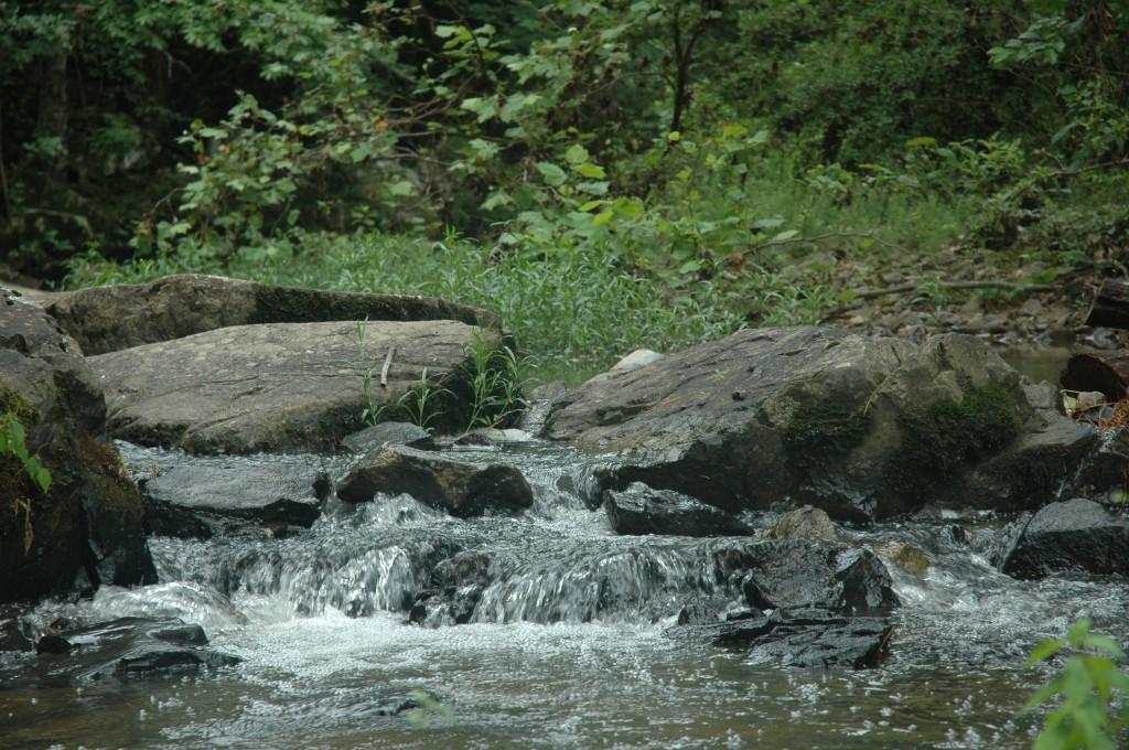 New Hope Creek in the Duke Forest (near Gate 26,  July 16, 2014)