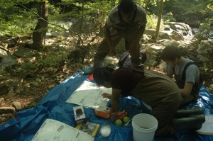 Macroinvertebrate Collection on 17 July 2014.