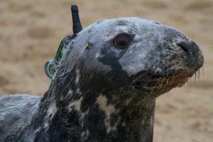 Cape-cod-seal (1)