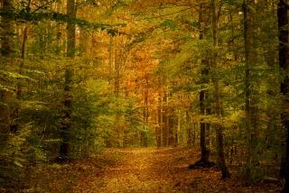 duke-forest