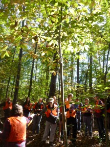 Tree Identification in the Duke Forest with Forest Measurement students (Fall 2013)