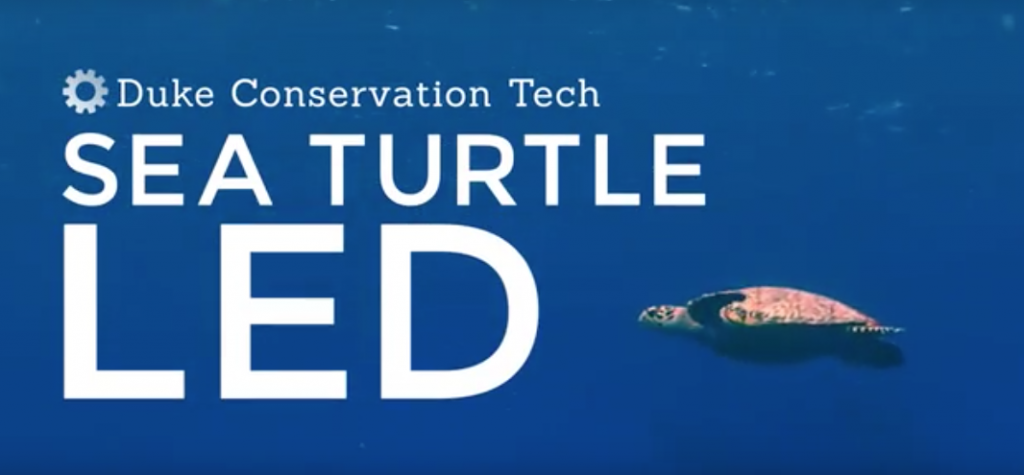 Sea Turtle LED presentation