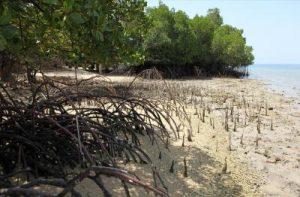 bali_barat_mangroves