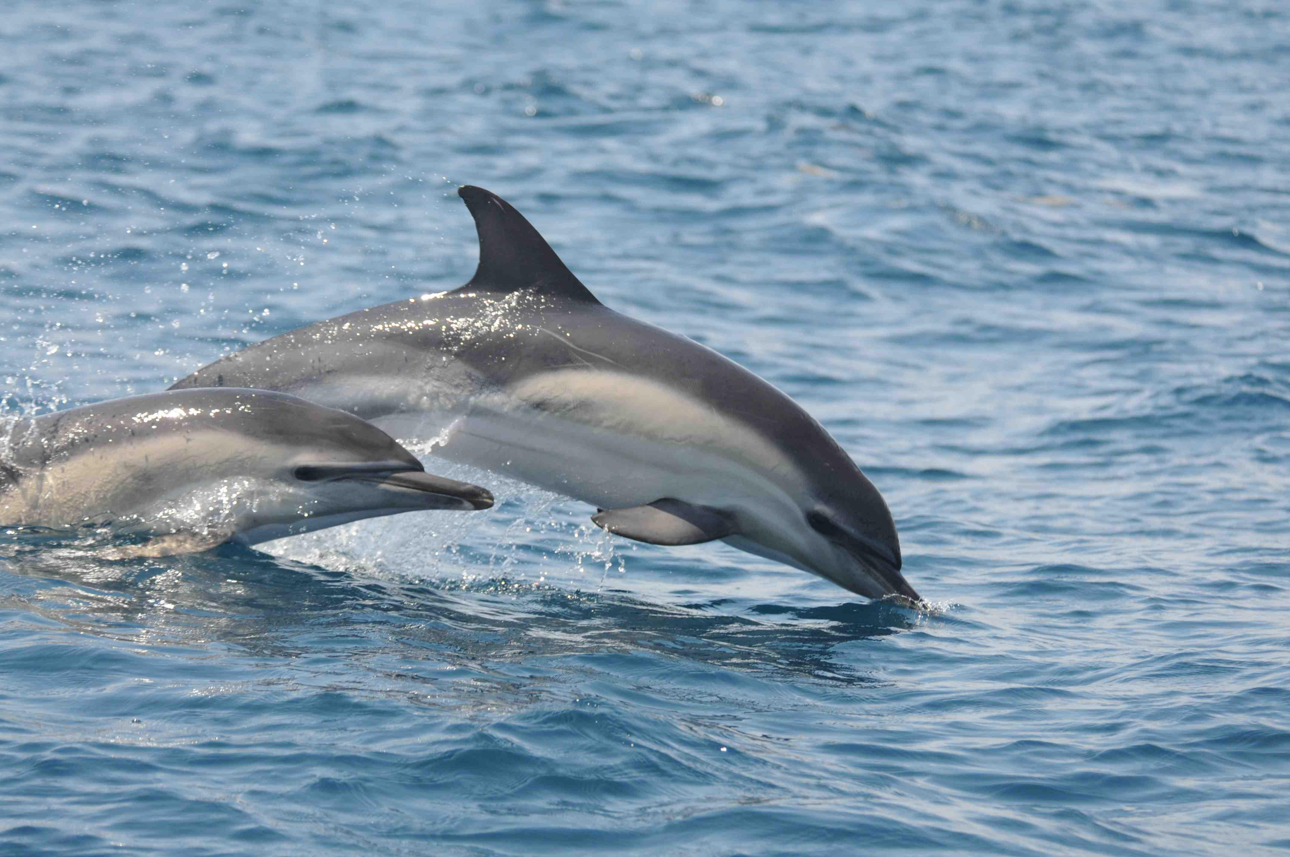 беломордый дельфин и их детеныши фото должны были