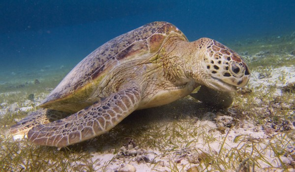 Turtle Boom May Cause Habitat Crash