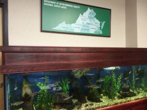 VA DEQ Fish Tank